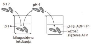 matura z biologii, metabolizm