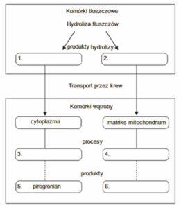 Metabolizm biologia